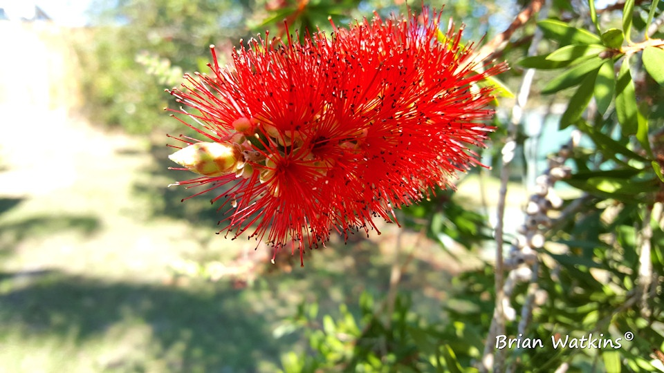 Bottle brush smartphone photography example by Brian Watkins